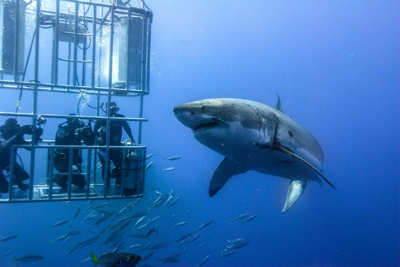 sport-cape-town-helicopters-tours-shark-cage-diving-1