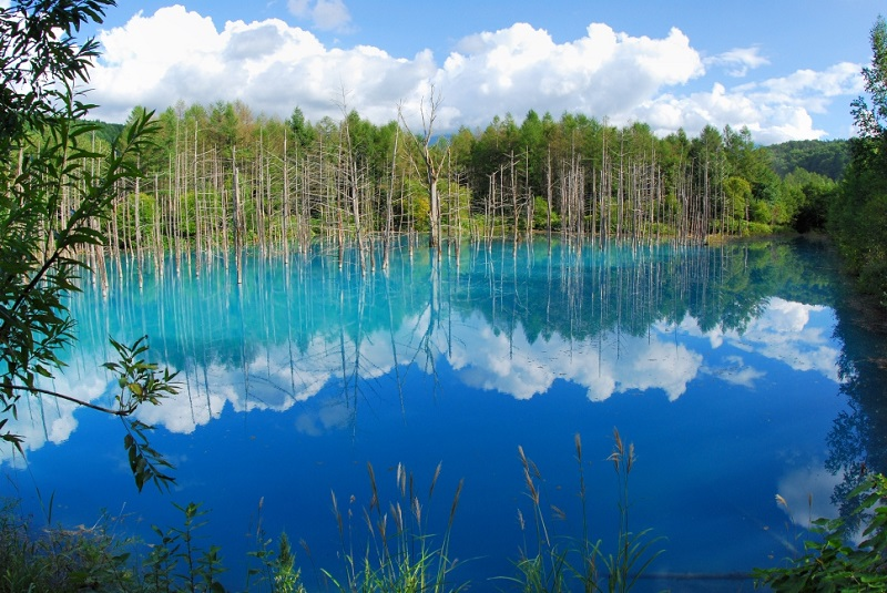 Blue pond Biei Summer 7