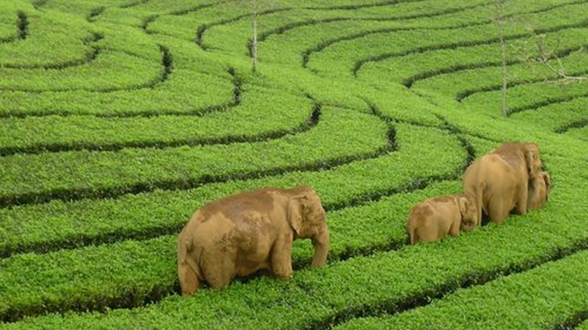Munnar travel places